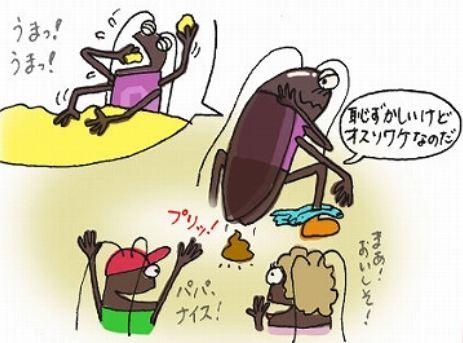性 ゴキブリ 洗剤 中